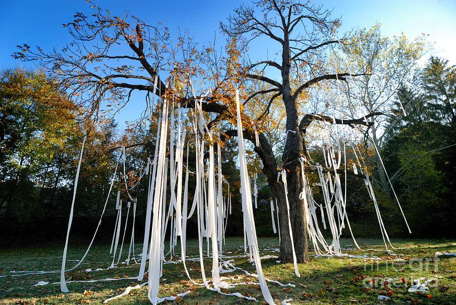 1-huge-tree-covered-in-toilet-paper-amy-cicconi.jpg