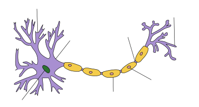 400px-Neuron_Hand-tuned.svg.