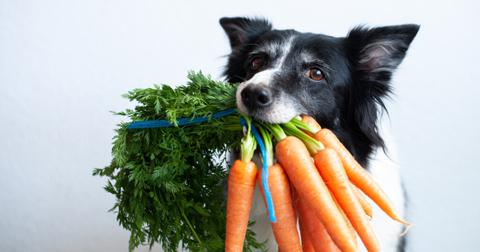 are-carrots-good-for-dogs1-1605706751485.jpg