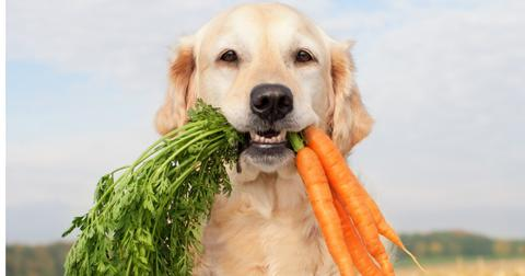 are-carrots-good-for-dogs2-1605706992926.jpg