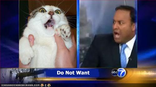 funny-pictures-zomg-cat-local-news.