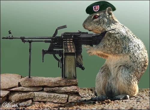 funny+squirrels+with+guns+(2).