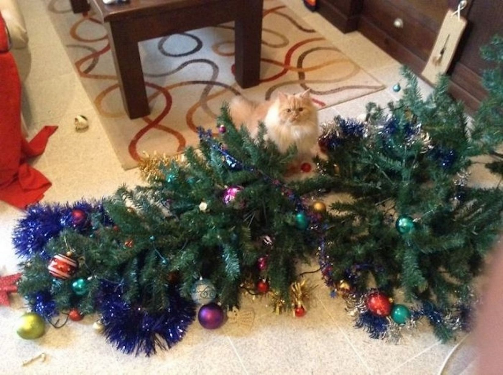 PAY-Cats-and-dogs-that-destroy-Christmas.