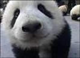 Surprise Panda!