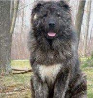 Big Dog Johnson