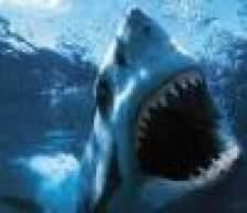 SharkB8