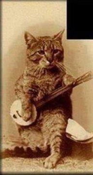 kittywithabanjo