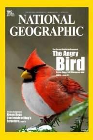 Bryan bird