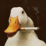 Truant Goose