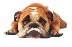 bigbeefdog