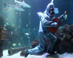 gitarrenhai