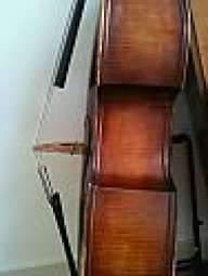 S.fasciani