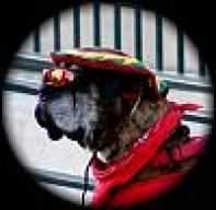 NorCal Dog